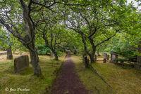 cemetery, graveyard, headstones, moss, Torshavn, Streymoy, Faroe Islands, summer