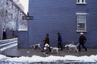 Dalmations,Winter,Lower East Side,Manhattan,New York,USA,Travel
