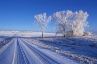Winter,Road,Trees,Snow,Sunrise,Drumheller,Alberta,Canada