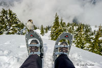 Gray Jay, Whiskey Jack, Snowshoeing, Cypress Provincial Park, British Columbia, Coast Mountains, Winter
