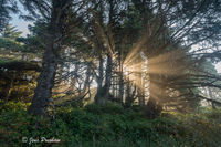 Sunbeams, Mist, Trees, Tofino, Vancouver Island, West Coast, British Columbia, Summer, Travel, Canada