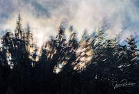 Coastal Fog, Trees, Sunrise, August, Colours, Hope Island, Vancouver Island, British Columbia, Canada, Pacific Ocean, Summer