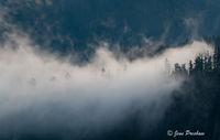 fog, trees, Stawamus Chief Provincial Park, Coast Mountains, Squamish, British Columbia, Canada, morning, summer