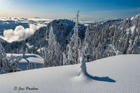 Snowfall, Trees, Mount Seymour Provincial Park, Coast Mountains, British Columbia, Winter, Mount Baker, Canada