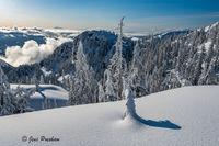 Snowfall, Trees, Mount Seymour Provincial Park, Coast Mountains, British Columbia, Winter, Mount Baker, Canada