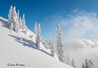 Trees, Fresh Snowfall, Clouds, Mist, Mount Seymour, Mount Seymour Provincial Park, British Columbia, Canada, Winter, Summit