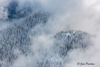 Clouds, Trees, Mount Seymour Provincial Park, Snowfall, Coast mountains, British Columbia, Canada, Winter