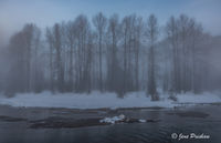 Trees, River, Riverbank, Mist, Fog, Sunrise, Mount Currie, First Nations, British Columbia, Canada, Winter