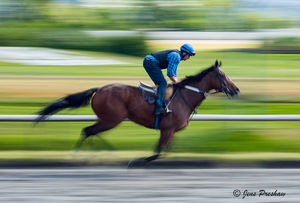 Thoroughbred, Jockey, Panning, Blur, Hastings Park Race Track, Vancouver, British Columbia, Canada, Autumn