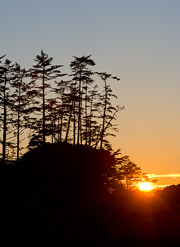 Trees and sunset in Pacific Rim National Park.