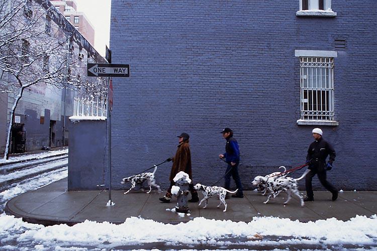 Dalmations,Winter,Lower East Side,Manhattan,New York,USA,Travel, photo