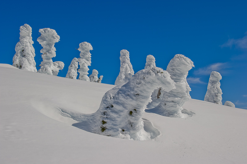 Snow Ghosts, Mount Seymour Provincial Park, Coast Mountains, British Columbia, Canada, Winter, photo