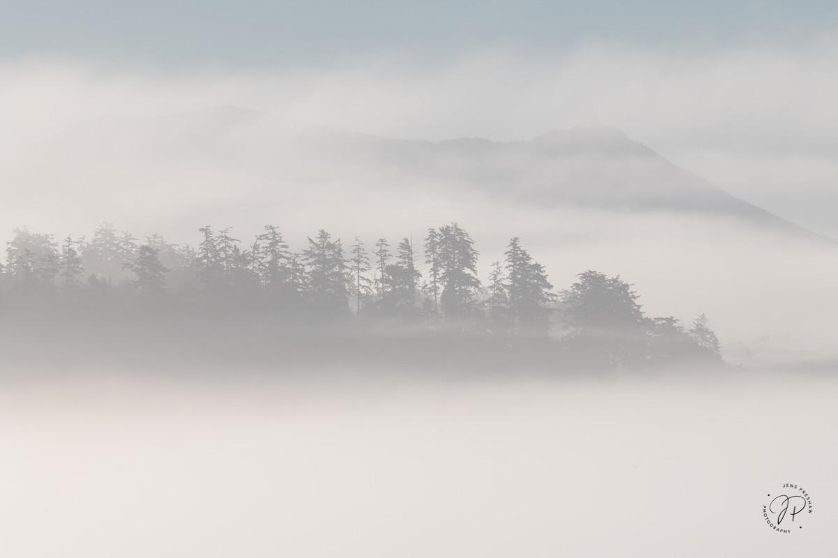 Greenpoint, Coastal Fog, Trees, Long Beach, Pacific Rim National Park Reserve, Vancouver Island, British Columbia, Canada, Summer, photo