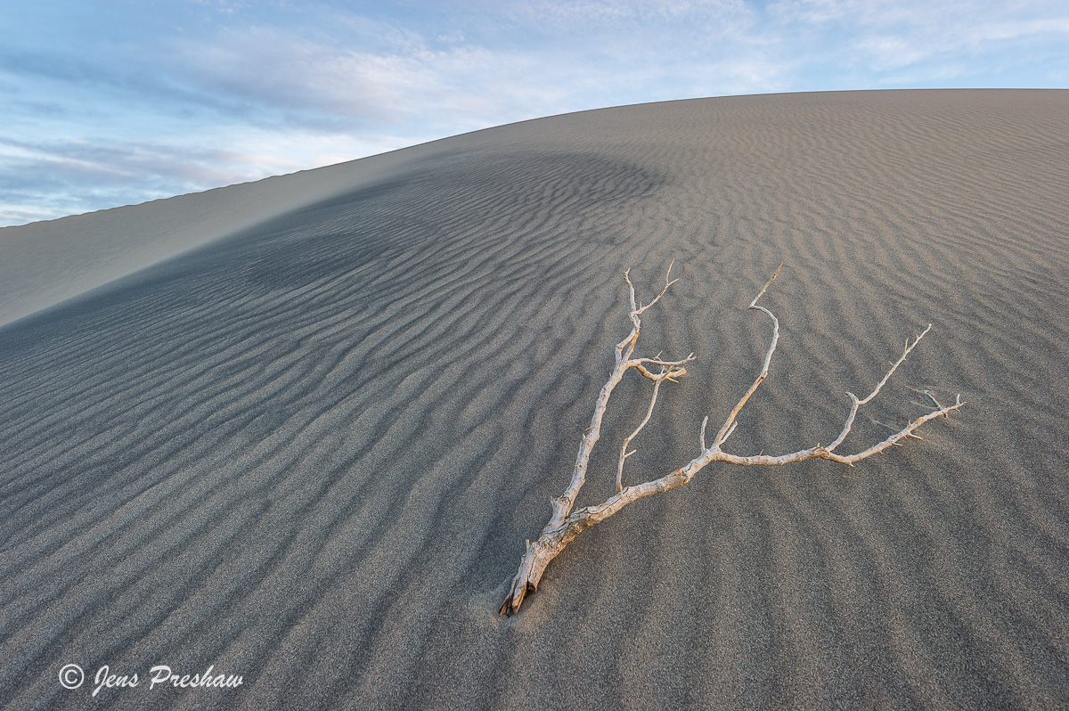 Branch, Mesquite Flats Sand Dunes, Clouds, Death Valley National Park, California, USA, photo