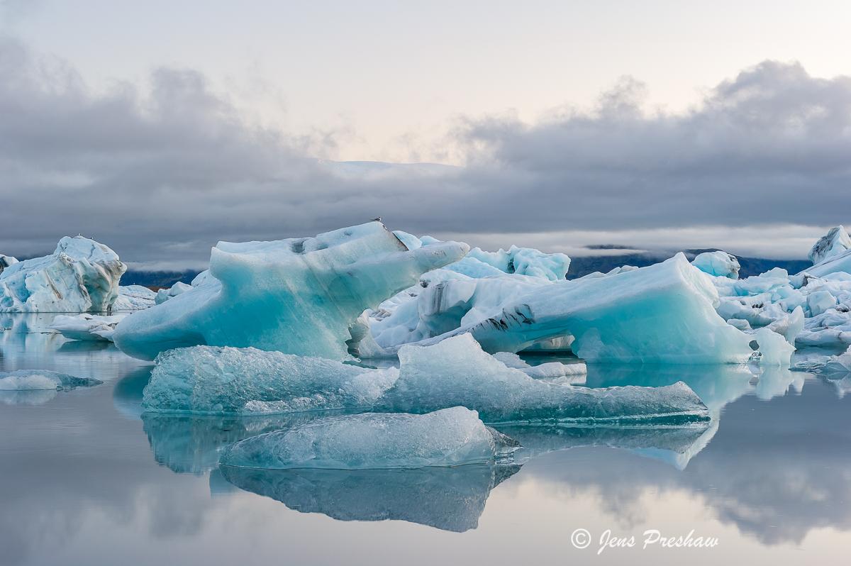 Arctic Tern, icebergs, Jokulsarlon, glacial lake, Iceland, summer, photo