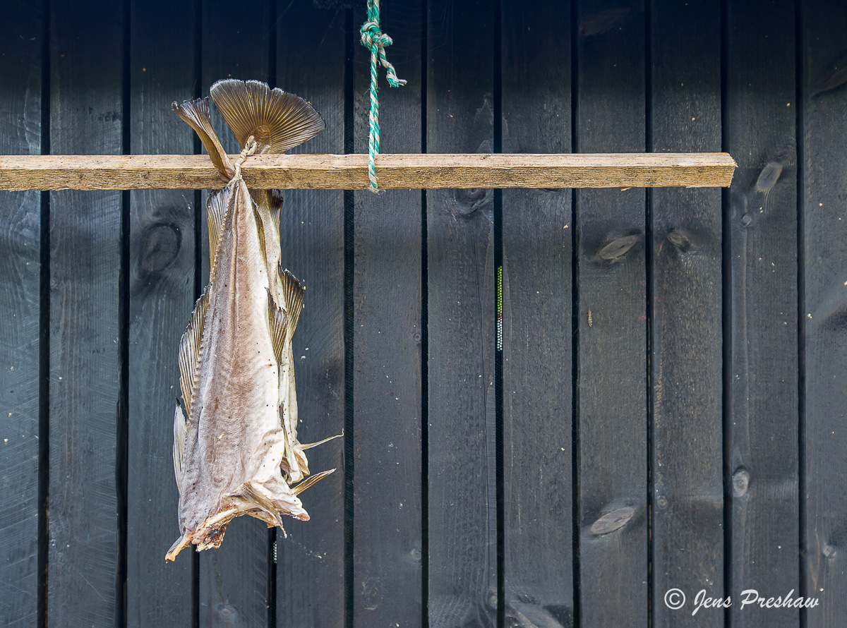 Wind Dried Fish, Gjogv, Eysturoy, Faroe Islands, Atlantic Ocean, Summer, photo