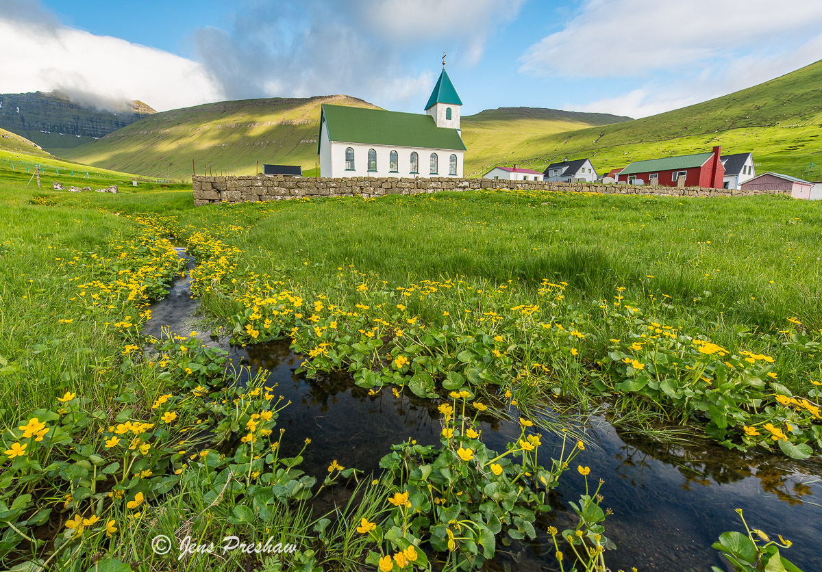 Marsh Marigold, stream, village, flowers, yellow, church, Gjogv, Northern Eysturoy, Faroe Islands, summer, photo