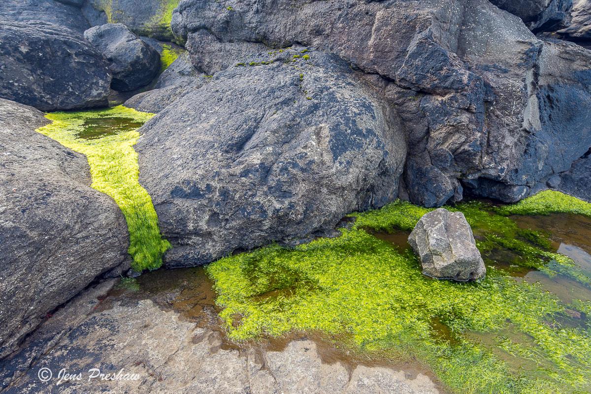 green algae, basalt rock, Vagar, Faroe Islands, summer
