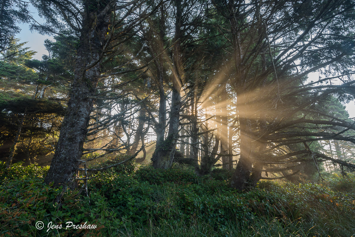 Sunbeams, Mist, Trees, Tofino, Vancouver Island, West Coast, British Columbia, Summer, Travel, Canada, photo