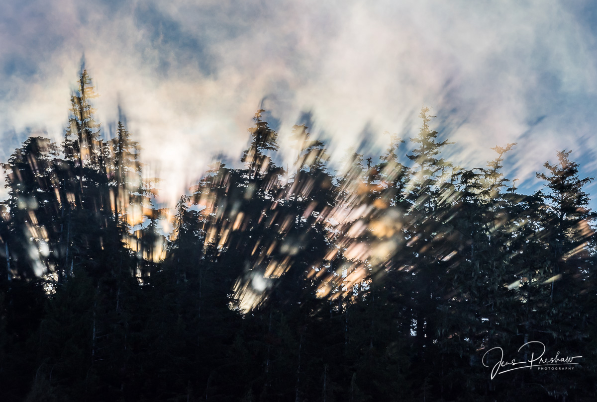 Coastal Fog, Trees, Sunrise, August, Colours, Hope Island, Vancouver Island, British Columbia, Canada, Pacific Ocean, Summer, photo