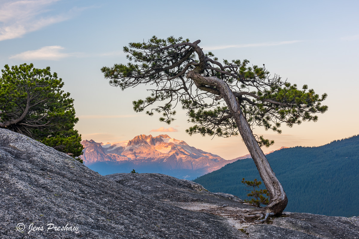 Scrub Pine , Stawamus Chief Provincial Park, Squamish, Coast Mountains, Mamquam mountain, Garibaldi Provincial Park, British Columbia, Canada, sunset, summer, photo