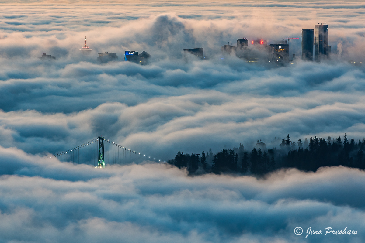 Early morning fog engulfs the Lions Gate Bridge, the trees in Stanley Park and tall buildings in downtown Vancouver.