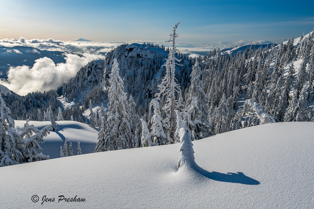 Snowfall, Trees, Mount Seymour Provincial Park, Coast Mountains, British Columbia, Winter, Mount Baker, Canada, photo