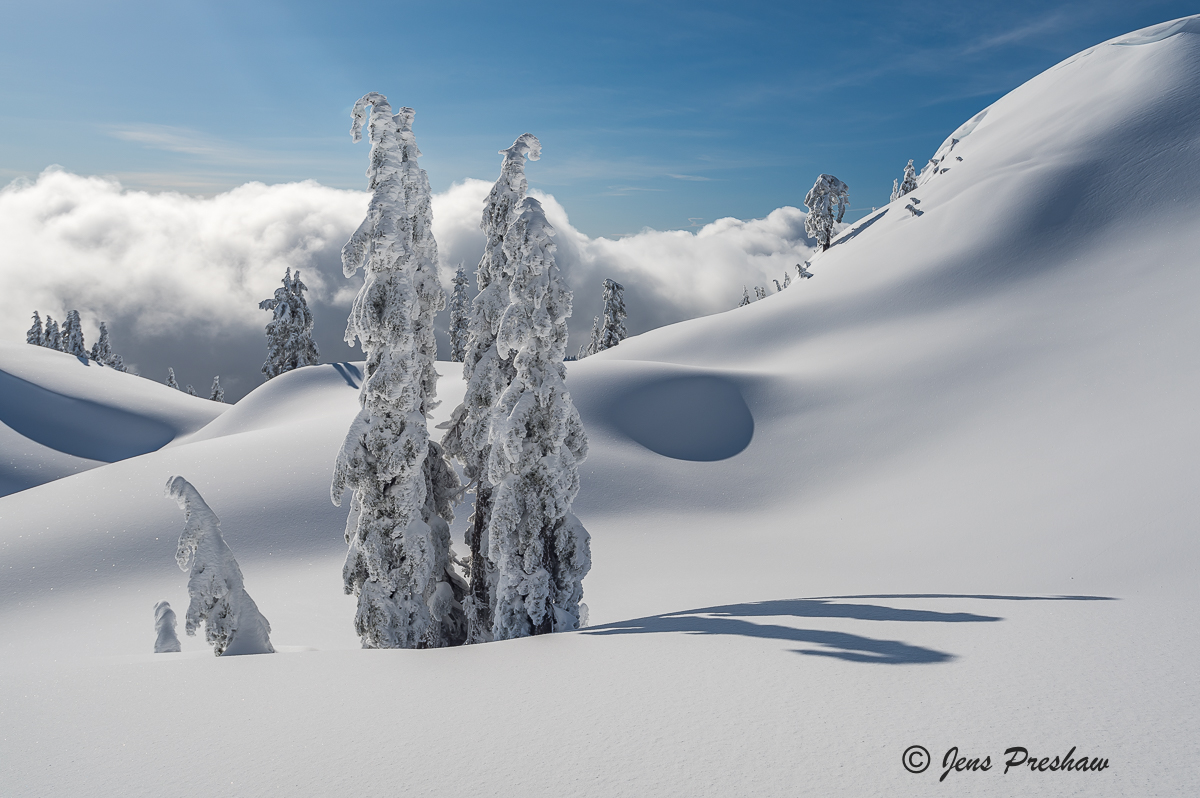 Snow Ghosts, Summit, Trees, Mount Seymour Provincial Park, British Columbia, Canada, Winter , photo