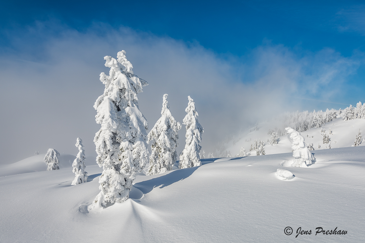 snow ghosts, Mount Seymour, Mount Seymour Provincial Park, Coast mountains, British Columbia, Canada, winter, photo