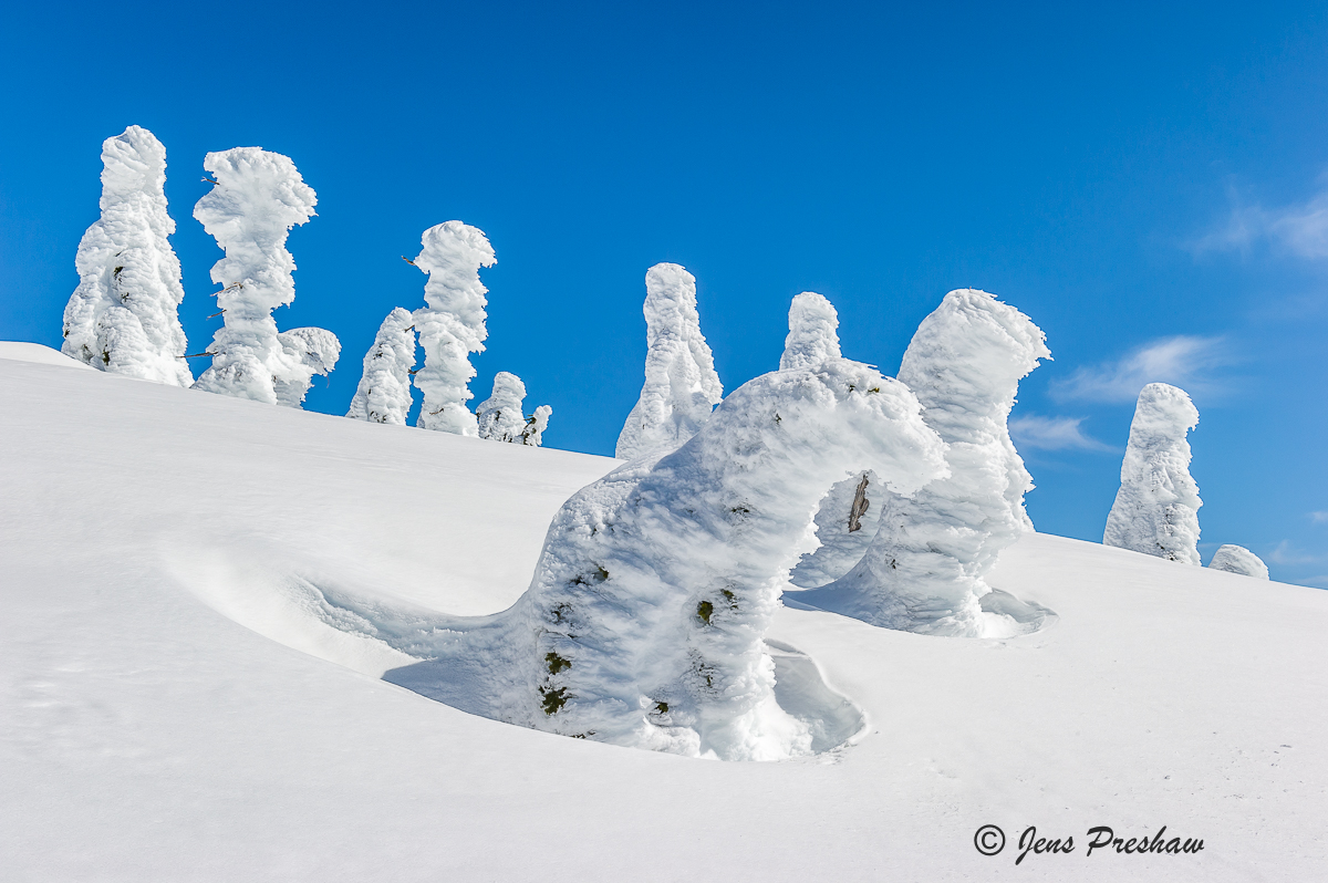 Snow Ghosts, Trees, Mount Seymour, Peak, Summit, Mount Seymour Provincial Park, Snow, British Columbia, Canada, Winter, photo