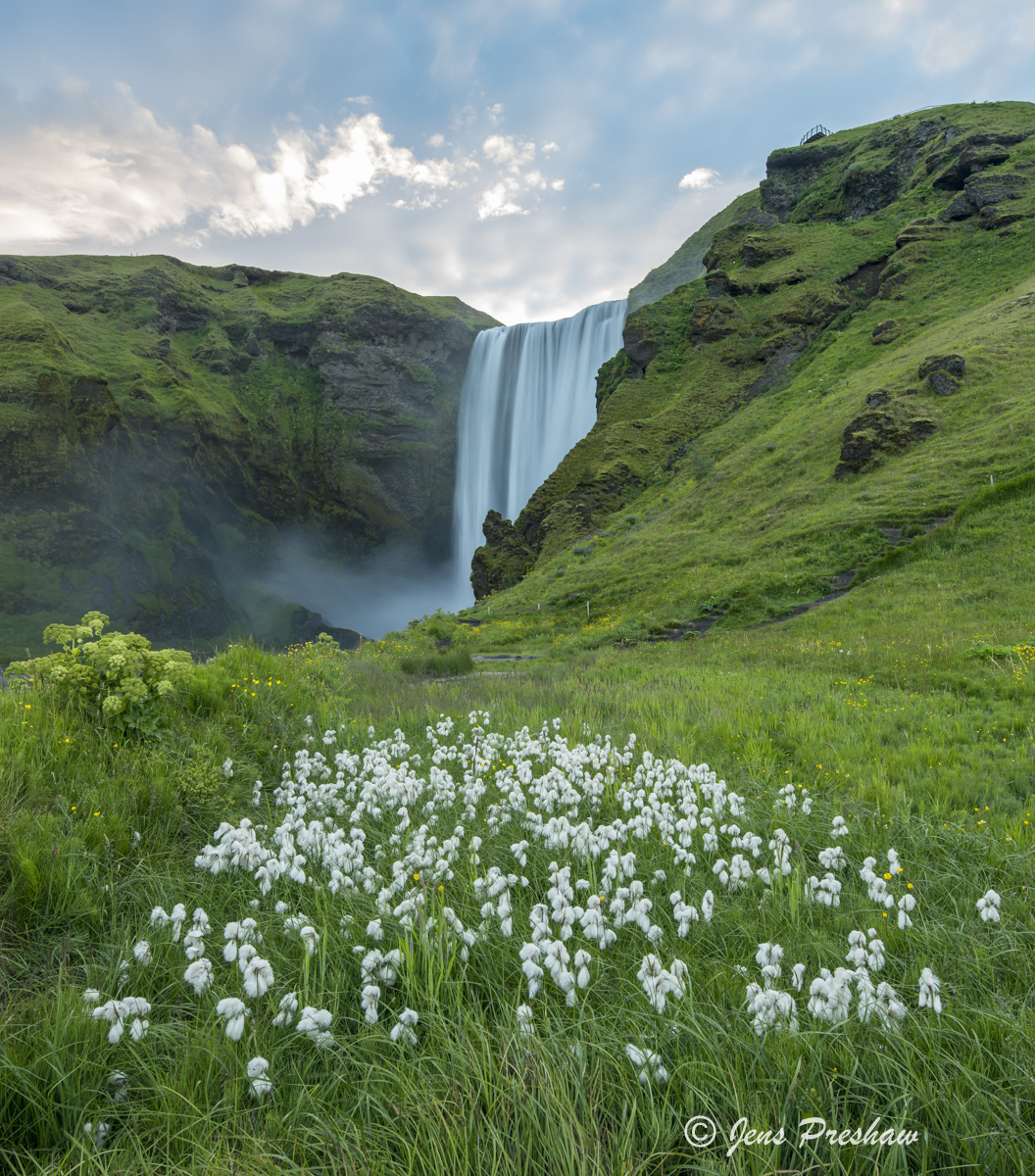 Hrafnafifa, Scheuchzer's cottongrass, White cottongrass, Eriophorum scheuchzeri, Skógafoss, Waterfall, Skógar, Skógá River, Iceland, Summer, photo