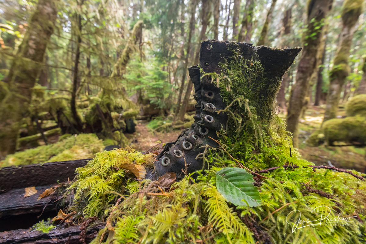 Logger Work Boot, Logging Camp, Sitka Spruce, Moss, Forest, Haida Gwaii, British Columbia, Canada, Summer , photo