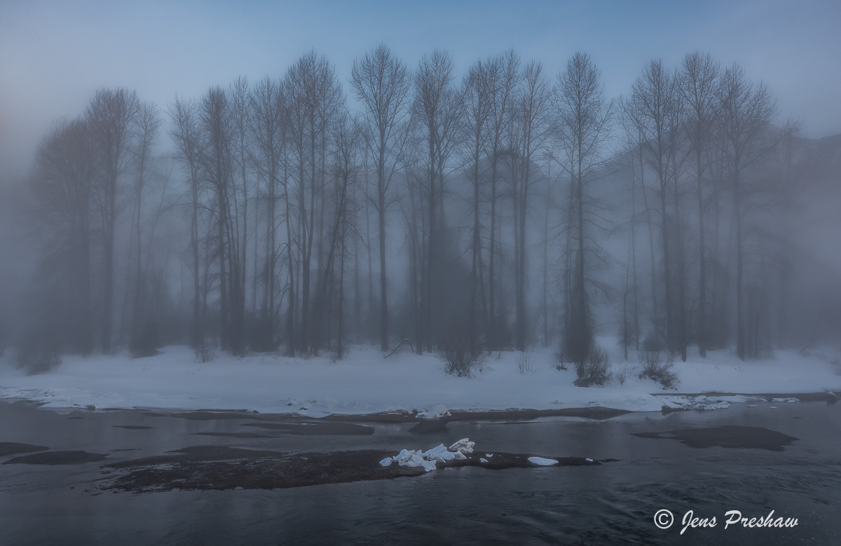 Trees, River, Riverbank, Mist, Fog, Sunrise, Mount Currie, First Nations, British Columbia, Canada, Winter, photo